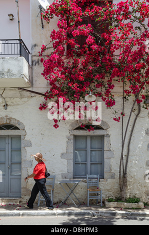 Old house with bougainvillea on the main street of Kardamyli village in the Outer Mani, Messinia, Peloponnese, Greece. - Stock Photo