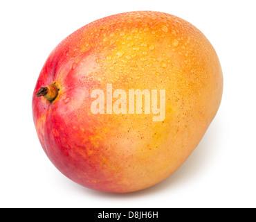 mango one wet on white background - Stock Photo