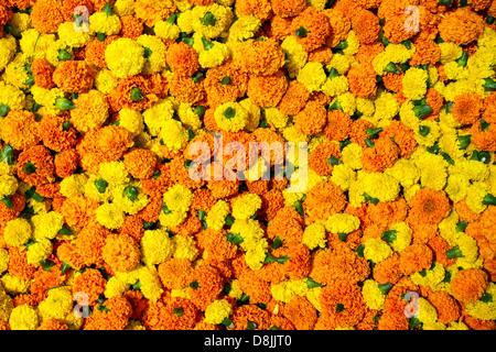 Marigold flowers garland background - Stock Photo