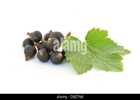 Black currant isolated on white background - Stock Photo