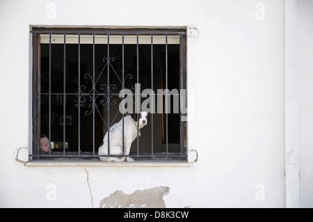 alte Frau und Hund hinter vergittertem Fenster - Stock Photo