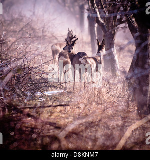 Deers in the forest - Stock Photo