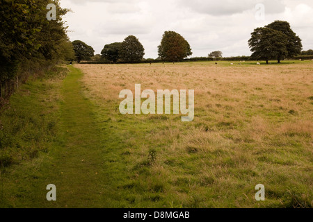 Field on Hadrian's Wall path - Stock Photo