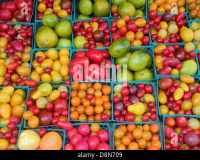 Organic tomatoes at a farmers market Union Square in Manhattan - Stock Photo