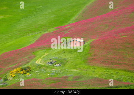 Sicily spring landscape with flowers and meadow in Central Sicily, Italy - Stock Photo