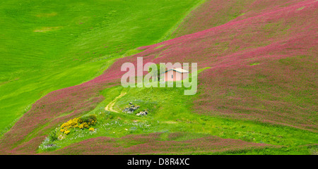 Sicily spring landscape with flowers in Central Sicily, Italy - Stock Photo
