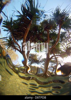 Pandanus Or Screw Pine Trees Above Coral Reef Hanalei