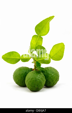 Organic bergamot and bergamot leaves isolated on white background. - Stock Photo