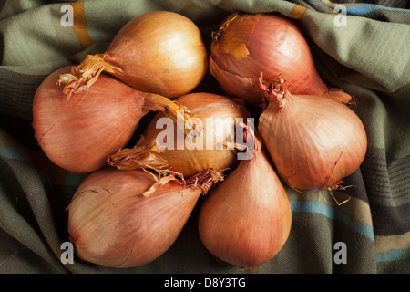 Shallots, a classic ingredient - Stock Photo