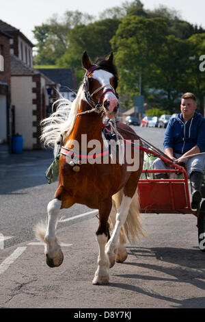 Appleby, Cumbria, Uk. 6th June, 2013.  Sprightly horse pulling horse exercise cart in the town centre at the Appleby - Stock Photo