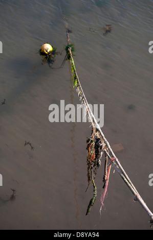 seaweed on rope,ocean, blue, water, deep,  boat, fishing, sea, ship, trawler, small, ocean, blue, water, deep, fisherman, - Stock Photo