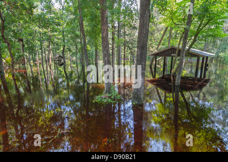 Flooding at Oleno State Park after Tropical Storm Debby hit North Central Florida 6-12. - Stock Photo