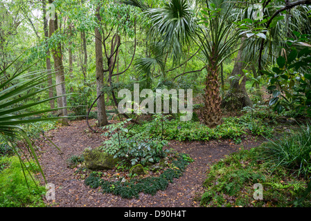 Kanapaha Botanical Gardens Located In Gainesville Florida Contorted Stock Photo Royalty Free