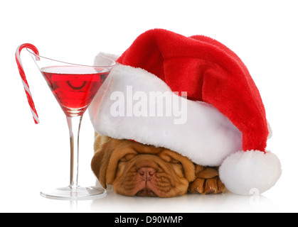 christmas puppy - dogue de bordeaux puppy wearing santa hat laying beside christmas cocktail isolated on white background - Stock Photo