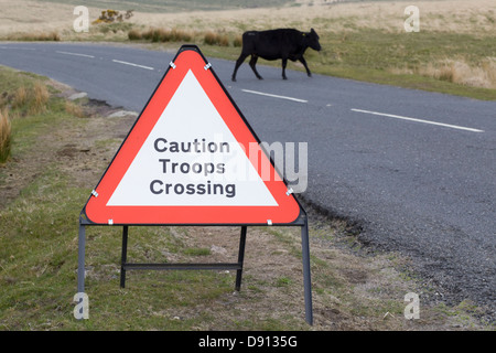 caution troops crossing sign, on a road in Dartmoor National park with a cow on the road Bos primigenius - Stock Photo