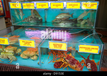 Singapore Singapore River Boat Quay restaurant hanzi characters Chinese live seafood tank lobster crab fish - Stock Photo