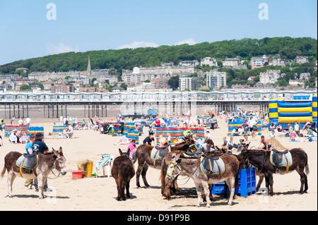 Donkeys on the beach at Weston Super Mare, UK - Stock Photo