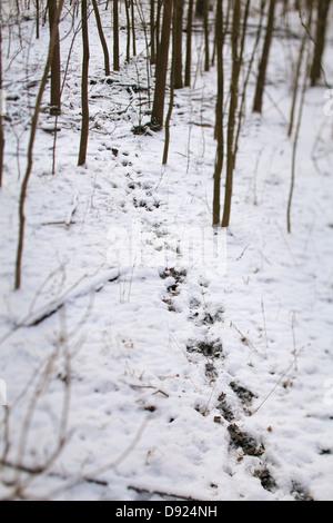 animal tracks through the snow - Stock Photo
