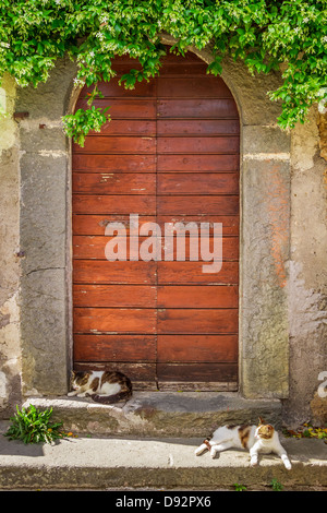 Two cats basking in the sun at the door - Stock Photo