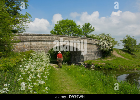 Walker approaching bridge number 167 on the Lancaster Canal at Crooklands, Cumbria, England UK - Stock Photo