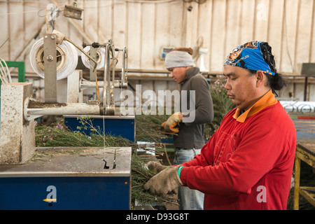 Flower export. Thai migrant works pack the flowers for shipping Photographed in israel - Stock Photo