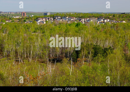 Suburban Sudbury with forests of white birch Greater Sudbury Ontario Canada - Stock Photo