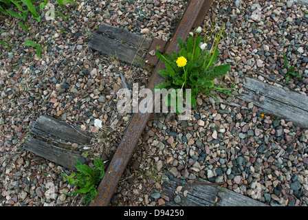 Close up of dandelion growing on railroad track - Stock Photo