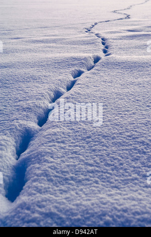 Animal track in snow - Stock Photo