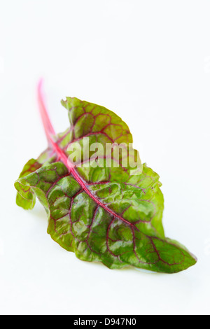 Rainbow Swiss chard  leaf on white background - Stock Photo