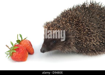 Hedgehog and strawberries - Stock Photo