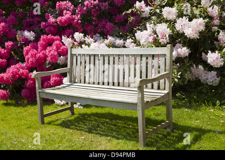 Spring garden with rhododendron blooms and old wooden bench. - Stock Photo
