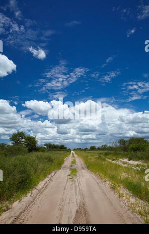 Track from Dobe Border to Nokaneng, North-western Botswana, Africa - Stock Photo
