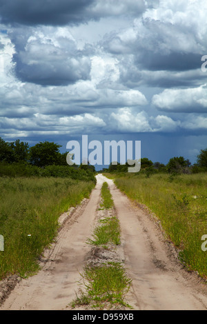 Track from Dobe Border to Nokaneng, and storm clouds, North-western Botswana, Africa - Stock Photo