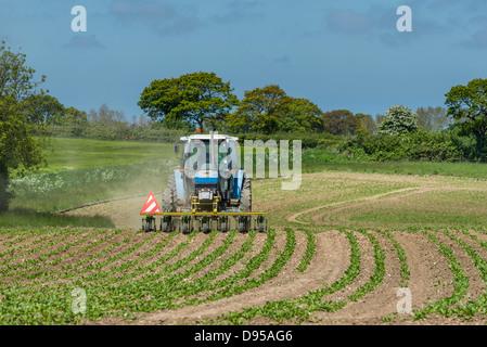 sugar beet, crop, weed, control, mechanized, hoe, tractor, - Stock Photo