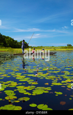Tourists being poled though lily pads in mokoro (dugout canoe), Okavango Delta, Botswana, Africa - Stock Photo