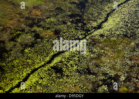 Chanel through water lilies, Okavango Delta, Botswana, Africa- aerial - Stock Photo