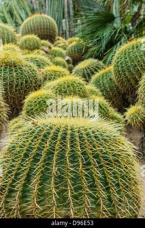 Cactus Garden display at the Huntington Gardens in Pasadena, CA ...