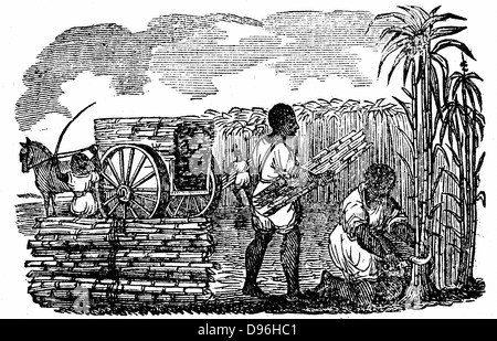 Slaves harvesting sugar cane in Louisiana. Note serrated sickle. Woodcut from 'Scenes of American Wealth and Industry' - Stock Photo