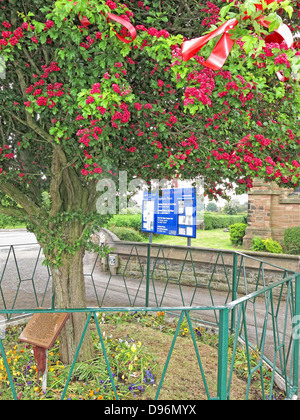 The famous Thorn tree at Appleton Thorn village, South Warrington, England  dressed for the annual June  'Bawming - Stock Photo