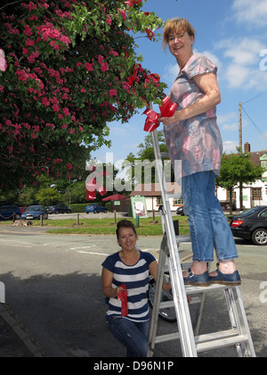 Preparing the famous Thorn tree at Appleton Thorn village, South Warrington, England  for the annual June  'Bawming - Stock Photo