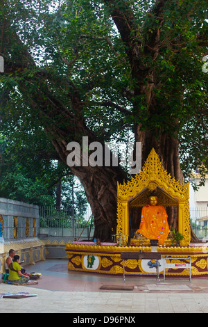 BUDDHA STATUE under a BODHI TREE at the SHWEDAGON PAYA or PAGODA which dates from 1485 - YANGON, MYANMAR - Stock Photo