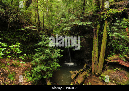 Sempervirens Falls by Big Basin Redwoods State Park - Stock Photo
