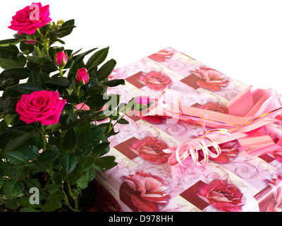 box with a gift and bouquet of roses on a white background - Stock Photo