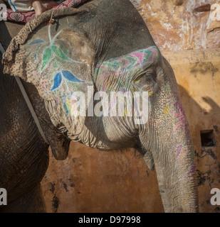 Colourful elephant in Jaipur, Rajasthan, India - Stock Photo