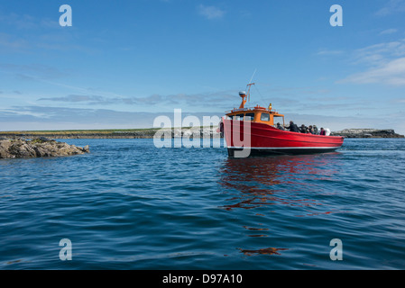 Tourists on a boat trip to the Farne Islands spot a pair of Atlantic Grey Seals basking on the rocks. - Stock Photo