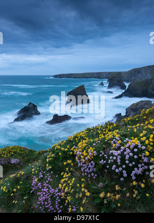 Spring wildflowers growing on the clifftops at Bedruthan Steps, Cornwall, England. May 2013. - Stock Photo