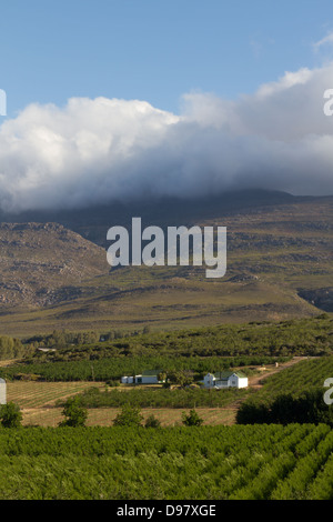 View over the Vines, Robertson, Western Cape,  South Africa - Stock Photo