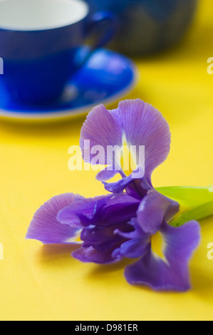 Portrait close-up shot of a purple and yellow Dutch Iris flower next to a blue espresso cup on a yellow tabletop. - Stock Photo