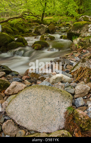The River Yealm descending through a set of whitewater rapids in Dendles Wood - a National Nature Reserve On Dartmoor, - Stock Photo