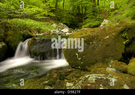 Waterfall on the River Yealm in Dendles Wood National Nature Reserve - Stock Photo